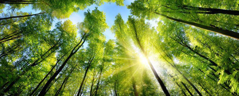 Bild zeigt nachhaltig bewirtschaftetn Wald im Sonnenschein