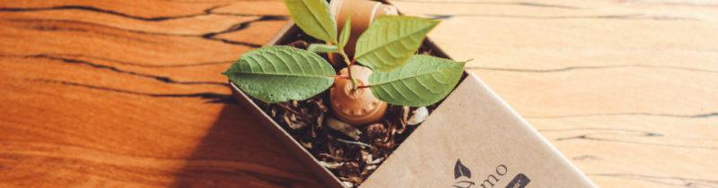 Pflanze waechst aus rezemo Kaffeekapsel, die im Kraftkarton auf Erde liegt