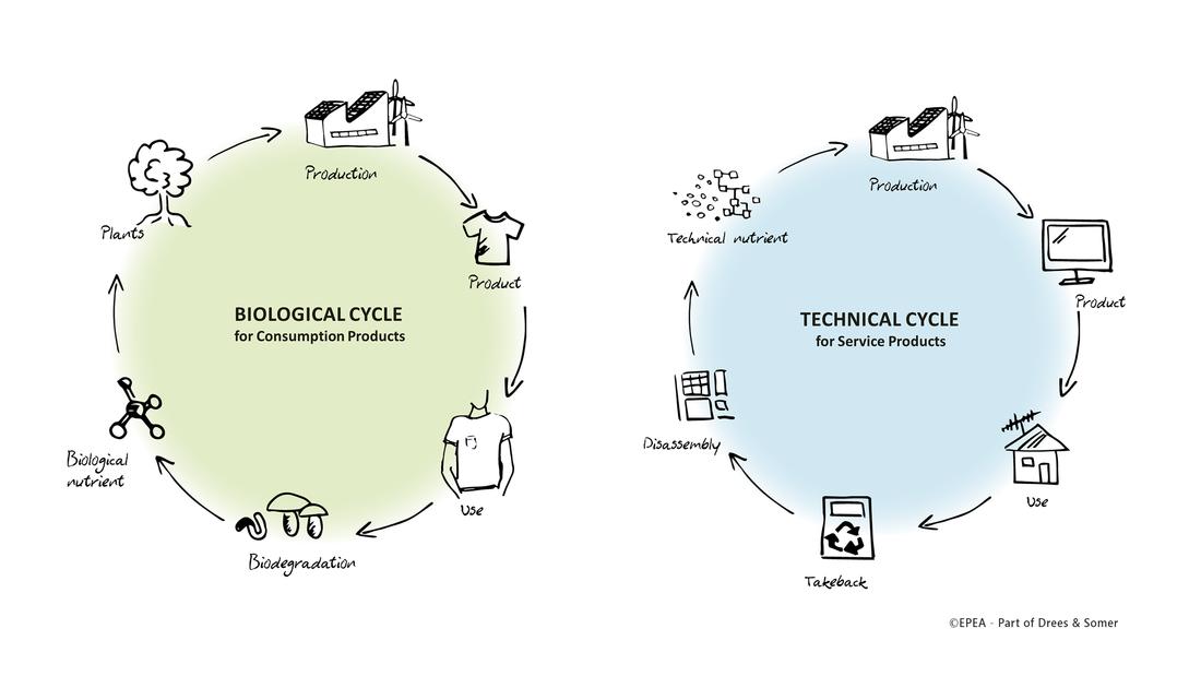 Infografik Cradle to Cradle Kreislauf in der Circular Economy