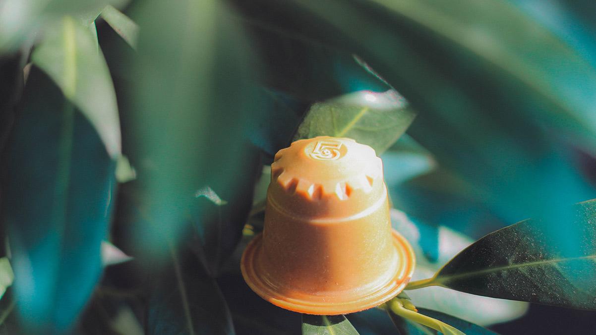 Nachhaltige rezemo Kaffeekapsel Edition 5 auf Zweig