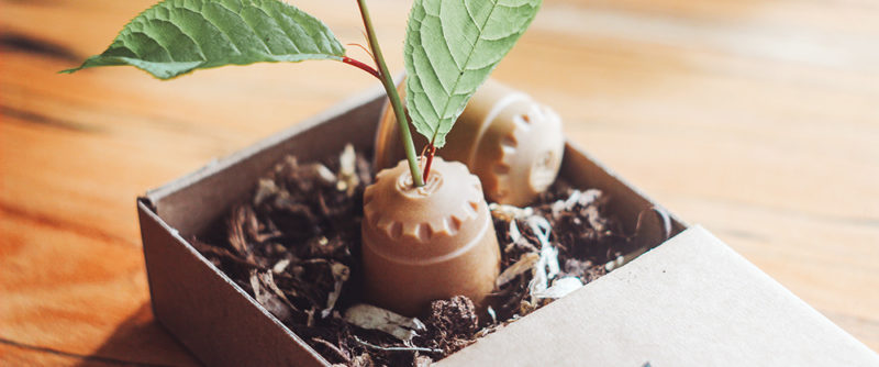 Die nachhaltige Kaffeekapsel aus Holz